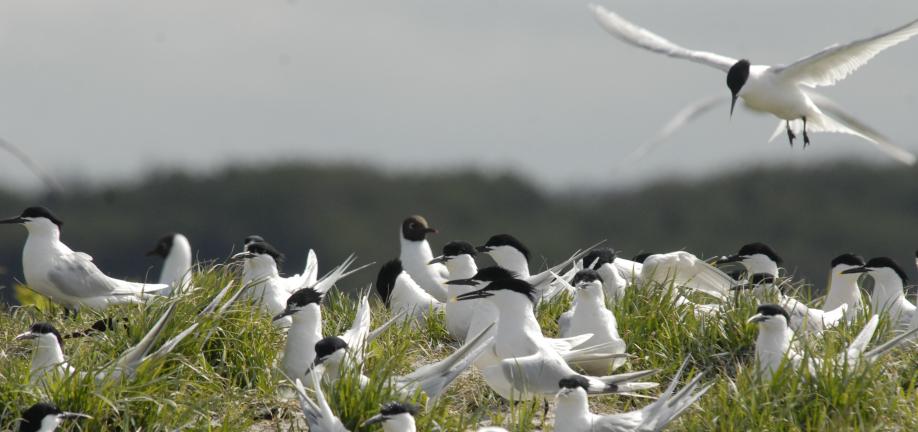 Forslag til Natura 2000-handleplaner 2016