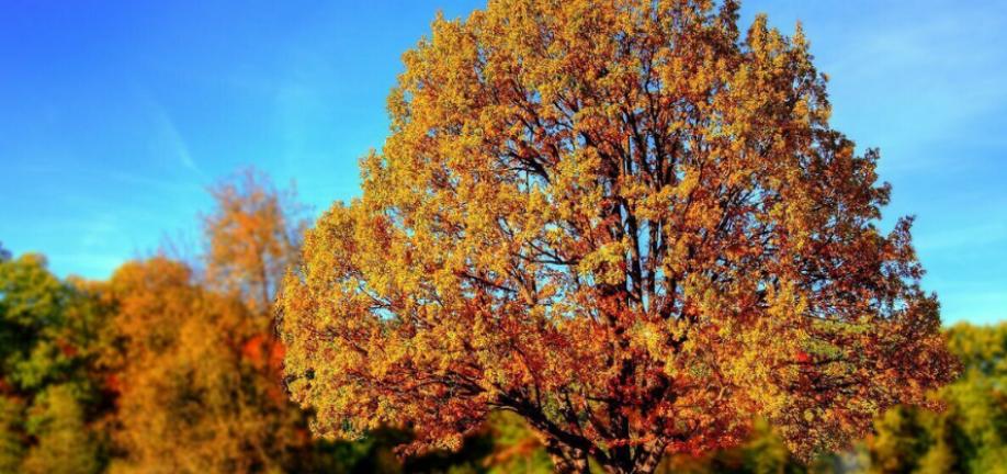Foto: Efterår