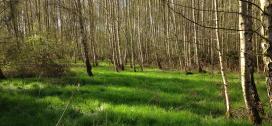 Certificeret skovdrift